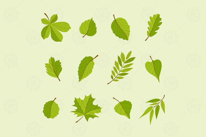 Thumbnail for Types of Leaves - modern vector set of objects