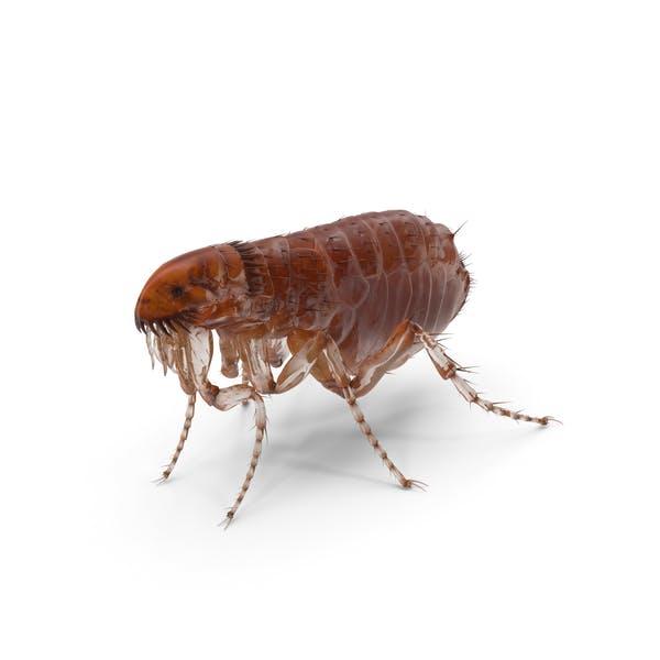 Flea Standing