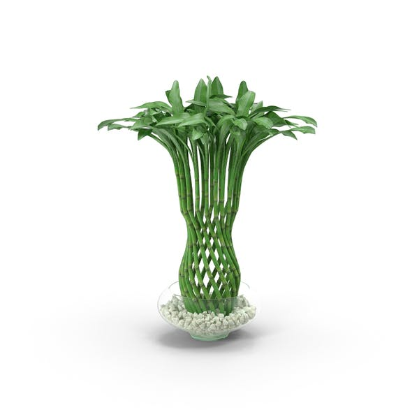 Thumbnail for Woven Bamboo Houseplant