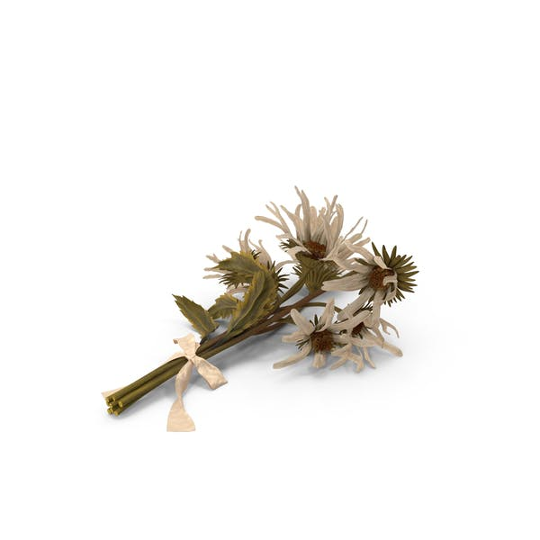 Withered Daisy Bouquet