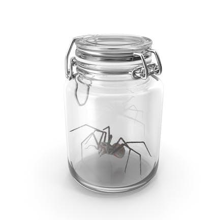 Glasgefäß mit Spinne