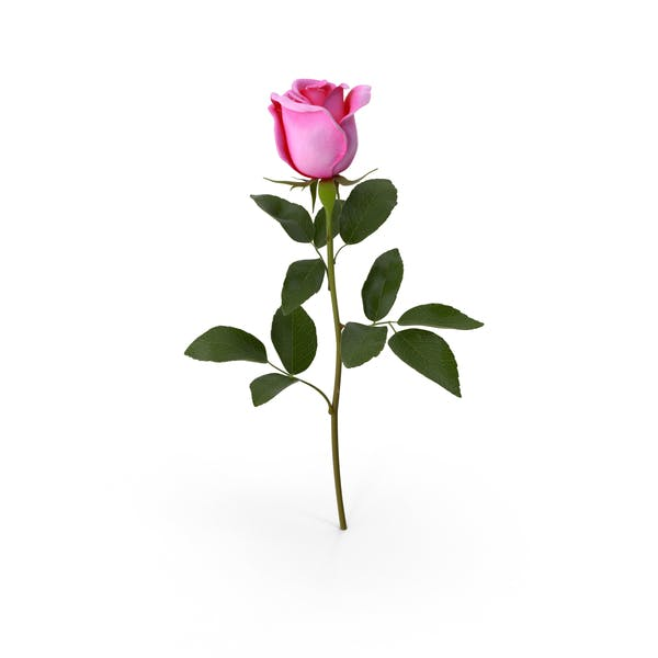 Cover Image for Pink Rose