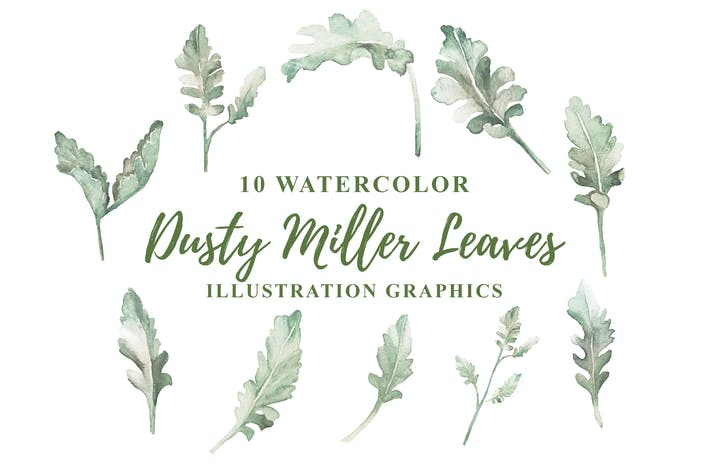 Thumbnail for 10 Watercolor Dusty Miller Leaves Illustration
