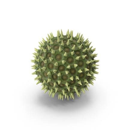 Pollen Particle
