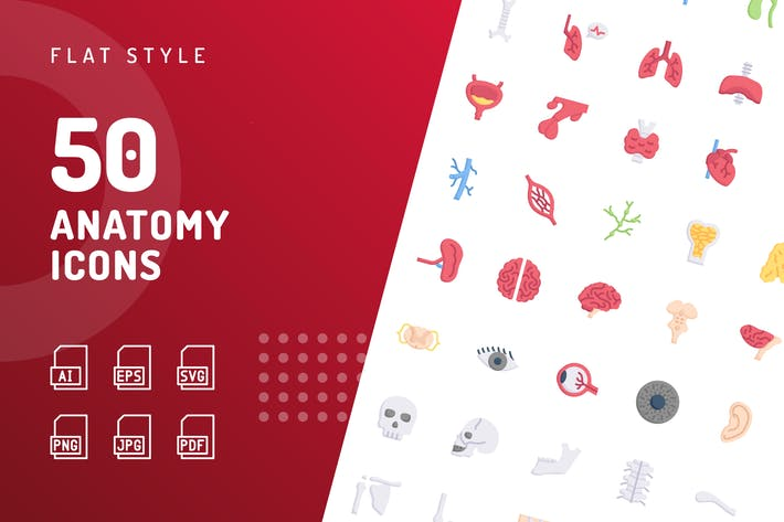 Thumbnail for Anatomy Flat Icons