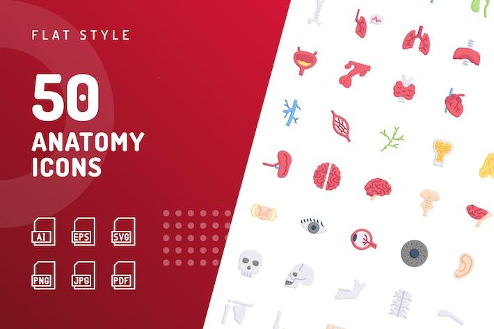 Thumbnail for Anatomía Íconos planos