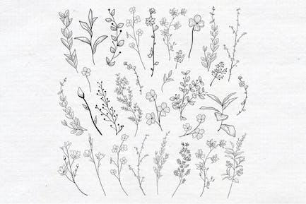 Vector Drawn Herbs, Plants, Flowers