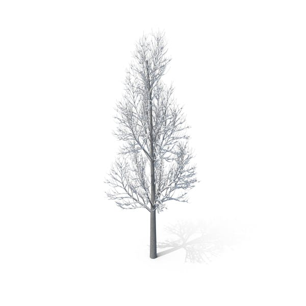 Winter Tree