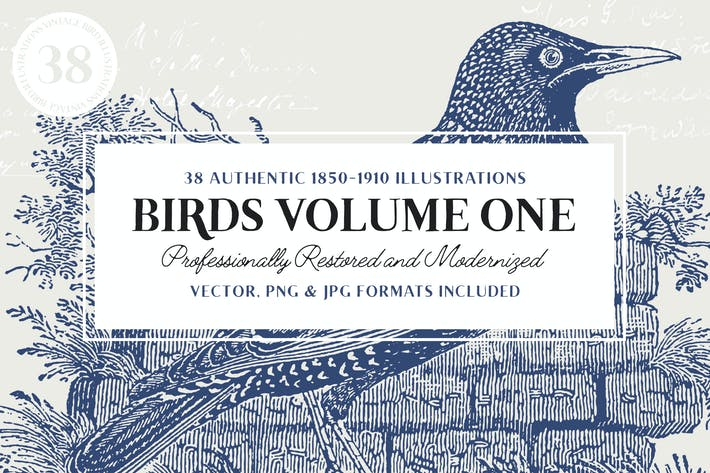 Thumbnail for 38 Vintage Engravings of Birds Vol.1