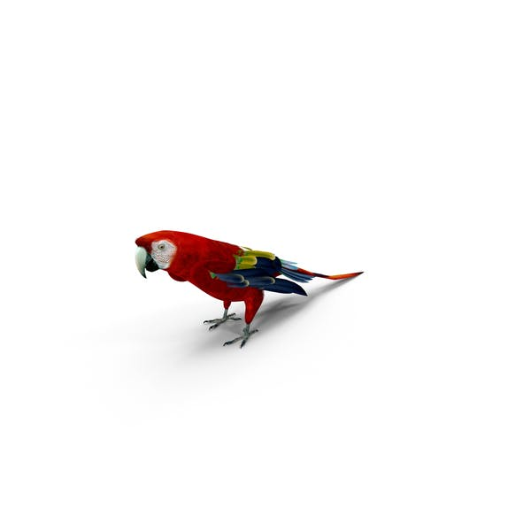 Cover Image for Scarlet Macaw