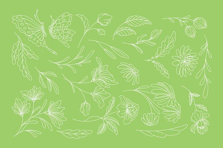 Botanical Line Illustration