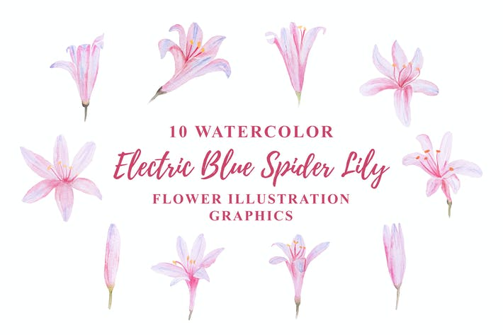 Thumbnail for 10 Watercolor Electric Blue Spider Lily Flower