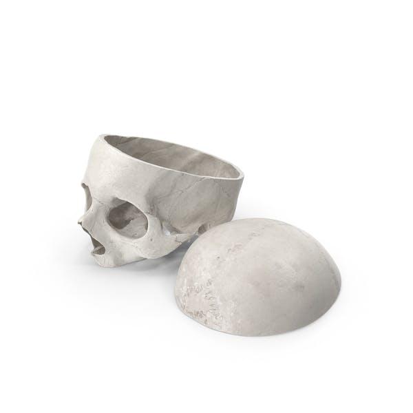 Человеческий череп вырезать с кусок белый