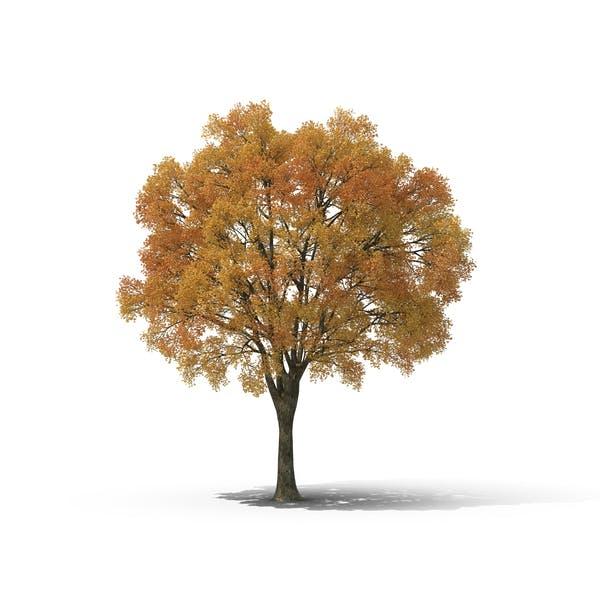 Thumbnail for Árbol de otoño