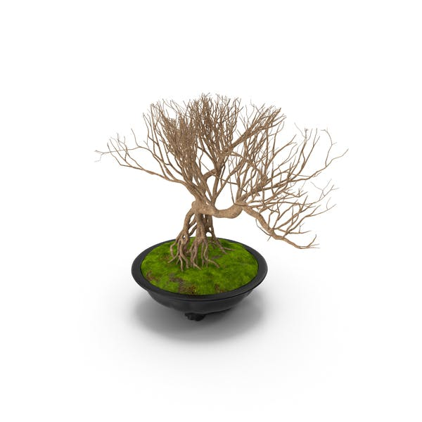 Bonsai Naked Tree in Pot Fur