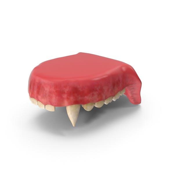 Creature Upper Jaw