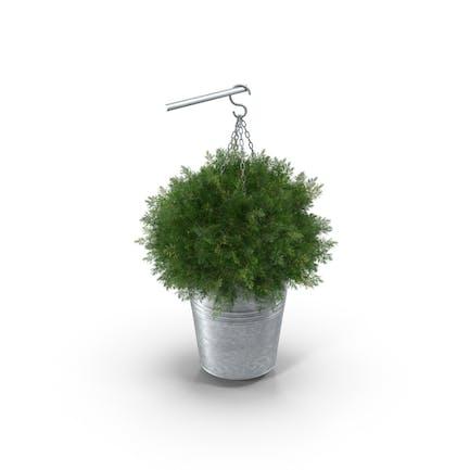 Planta Colgantes Pequeña