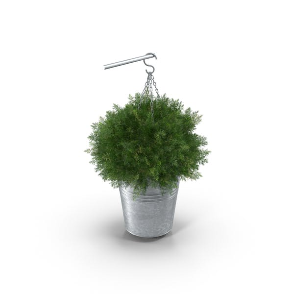 Thumbnail for Small Hanging Plant