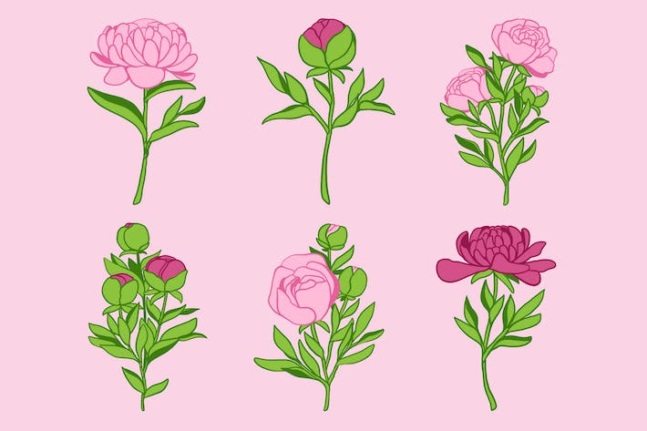 Thumbnail for Peony Clipart