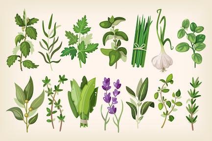 Common Herbs
