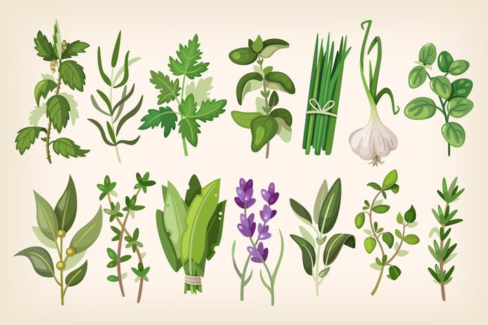 Cover Image For Common Herbs