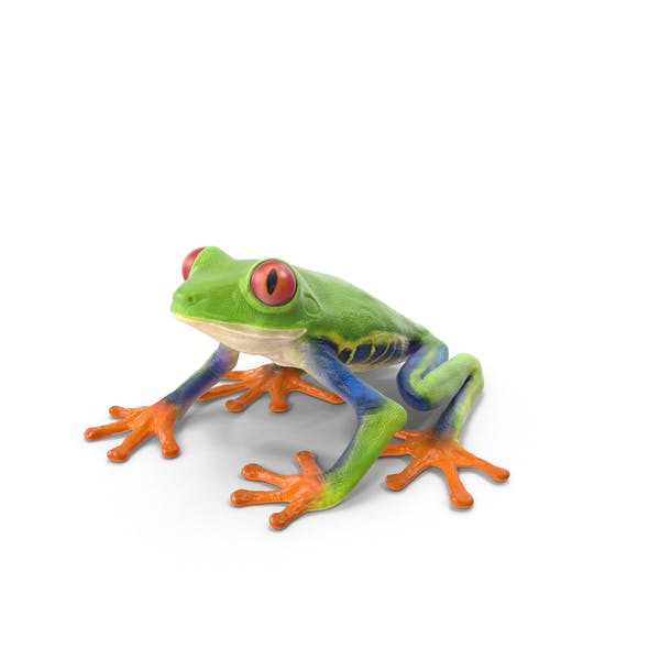 Thumbnail for Red Eyed Tree Frog