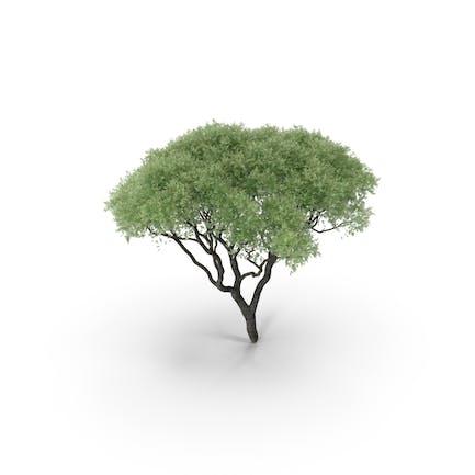 Realistic Tree