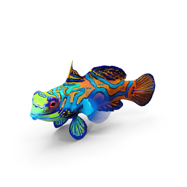 Thumbnail for Mandarin Fish