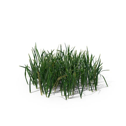 Einfaches Gras