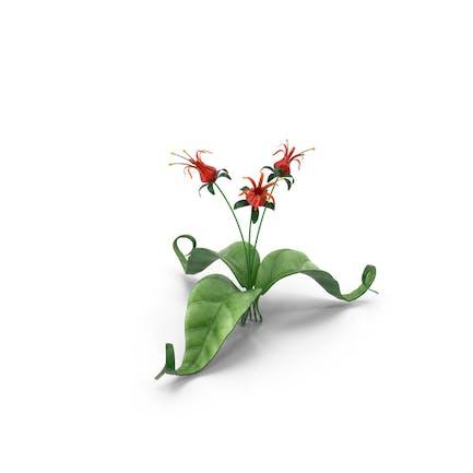 Rote Blumen