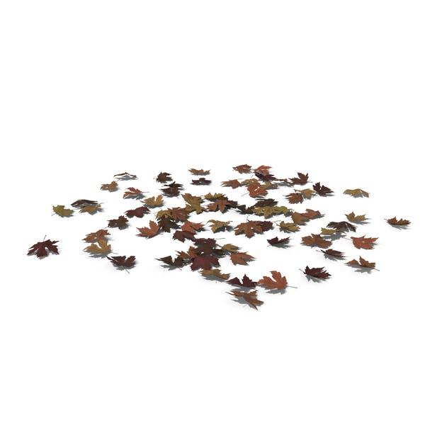 Thumbnail for Fallen Maple Leaves