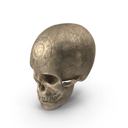 Cráneo Antiguo