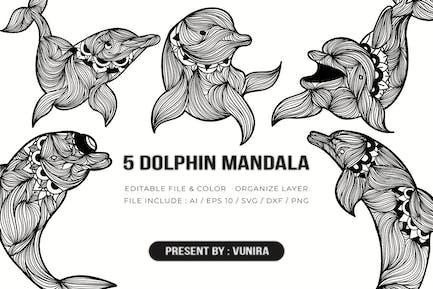5 Dolphin Mandala   Design Illustration