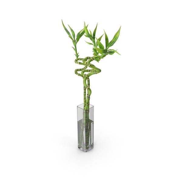 Lucky Bamboo Bouquet