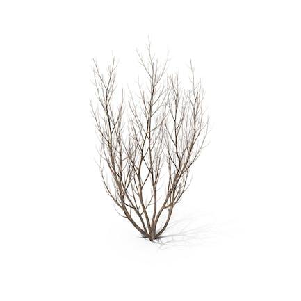 Winterbusch