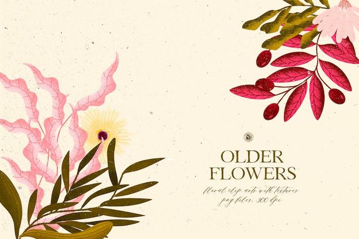 Thumbnail for Older Flowers