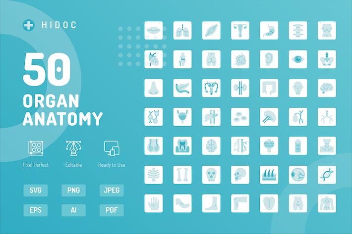 Thumbnail for Hidoc - Organ Anatomy Icons