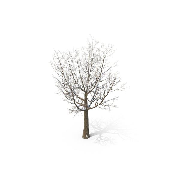 Thumbnail for Snowy Tree