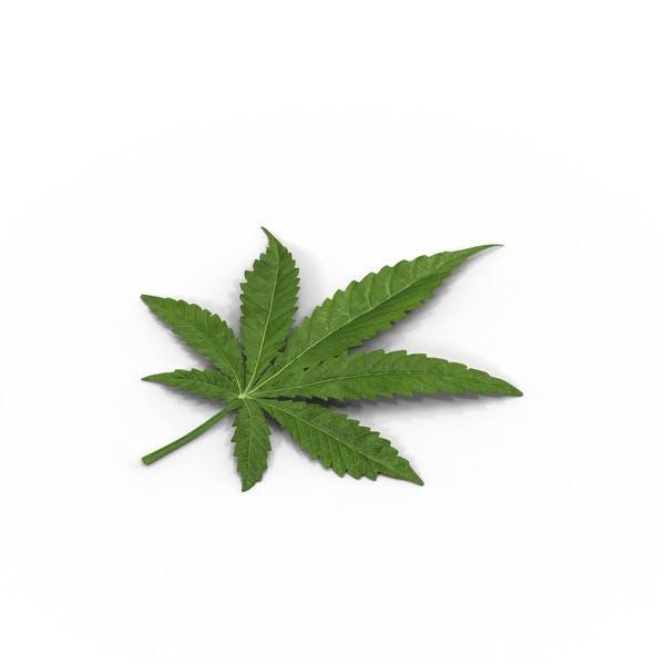Marihuana Blatt