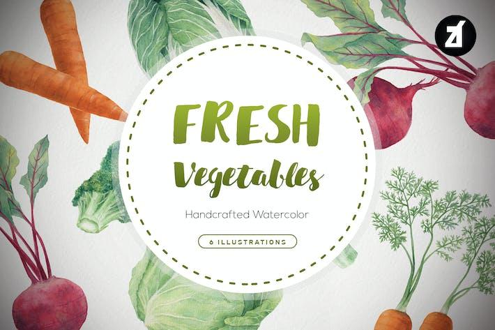 Fresh vegetables handdraw watercolor illustrations