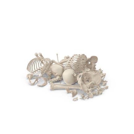Pila de huesos de esqueleto