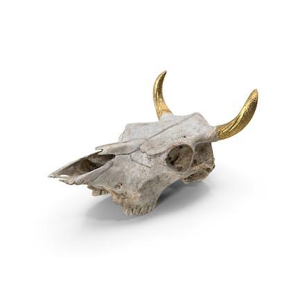 Kuhschädel mit goldenen Hörnern