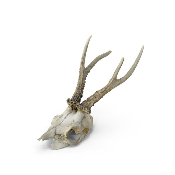 Thumbnail for Deer Skull