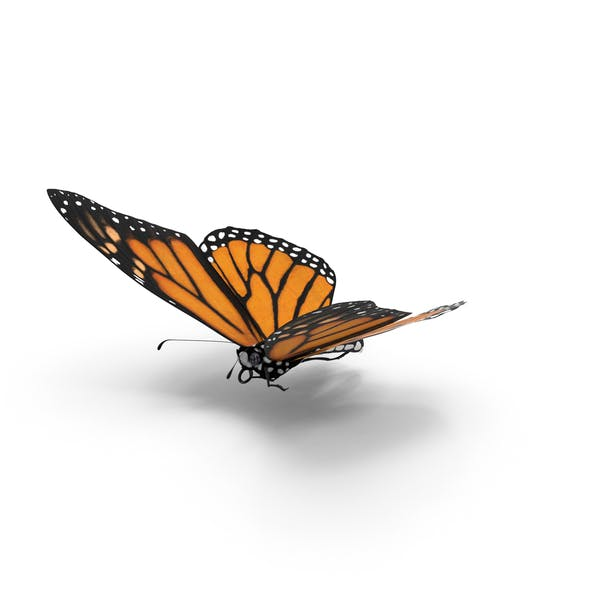 Thumbnail for Monarch Butterfly