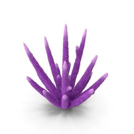 Korallenrot