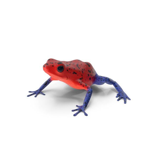 Клубничный дротик лягушка