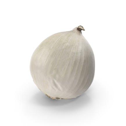 Weiße Zwiebel