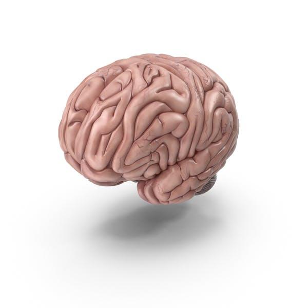 Thumbnail for Human Brain