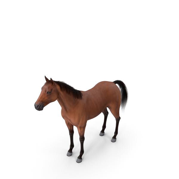 Bay Horse Fur