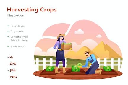 Ilustración de cosecha de cultivos